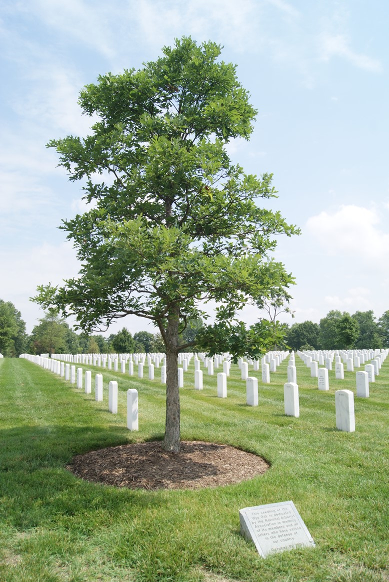 Medal of Honor Historic Tree